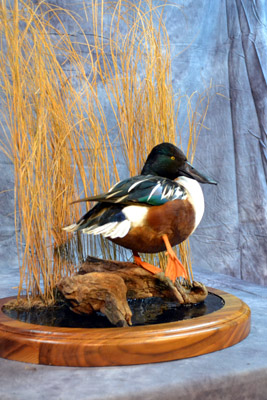 Central NY Taxidermists